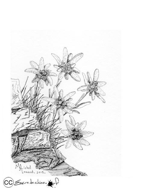 Pub-Edelweiss